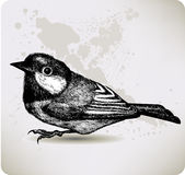 Bird titmouse, hand-drawing. Vector illustration. Royalty Free Stock Photography