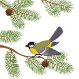 Bird Titmouse on Pine Branch Stock Photo