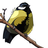 Bird titmouse sitting on a branch Stock Photos