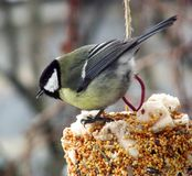 The bird on the bird feeder in the winter stock photo