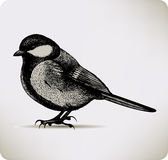 Bird titmouse. Vector illustration. Royalty Free Stock Photos