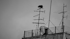 Bird on top of the tower. royalty free stock image