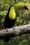 Bird, Toucan, Beak, Hornbill stock photo