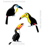 Bird Toucan Set Cartoon Vector Illustration Stock Image
