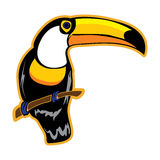 Bird. Toucan on a white background. Stock Images