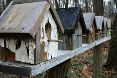 Bird Townhouses. Bird houses lined up in woods Stock Images