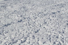 Bird trace in snow background Royalty Free Stock Images