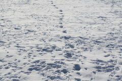 Bird trace in snow background Royalty Free Stock Photography