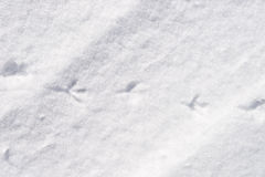 Bird traces in snow Royalty Free Stock Photos
