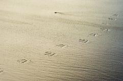 Bird tracks or footprints in sand Royalty Free Stock Photos