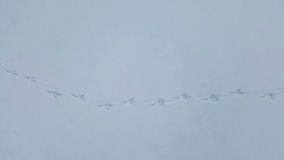 Bird tracks in snow Stock Photography