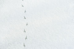 Bird Tracks On Snow Stock Photo