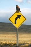 Bird on a traffic sign. On road in nature Royalty Free Stock Photos