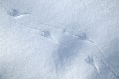 Bird trails in snow royalty free stock images