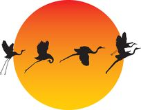 Bird Transformation Royalty Free Stock Photo