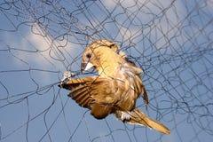 Bird. Trapped in birds Stock Photo