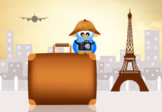 Bird traveling in Paris Stock Photography
