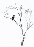 Bird in Tree. An illustration of a bird in a tree Stock Photo