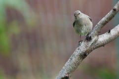 Bird on the tree Stock Image