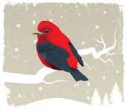 Bird on tree. (winter scenery Royalty Free Stock Images
