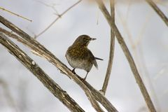 Bird on a tree. Wintertime Stock Photo