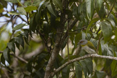 A bird in a tree Royalty Free Stock Photography