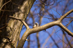 Bird on a tree. In the autumn Stock Images