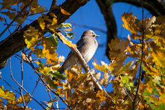 Bird on a tree Stock Images