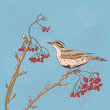 Bird on the tree. Background  with bird on the tree royalty free illustration