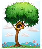 A bird in a tree with a bird house. Illustration of a bird in a tree with a bird house on a white background Stock Photo