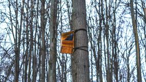 A bird on a tree in a birdhouse in winter. A bird on a tree in the forest in a birdhouse in day winter Stock Images