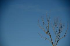 Bird tree with blue sky Royalty Free Stock Photo