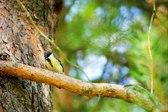 Bird. On a tree branch stock image