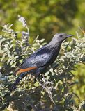A bird in a tree branch in Cape Town stock photo