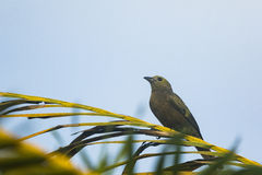 Bird on a tree branch Stock Images