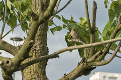 Bird on a tree branch. On a sunny day Royalty Free Stock Photo