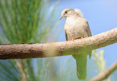 Bird on a tree branch watching carefully Royalty Free Stock Images