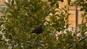 Bird among tree branches stock video