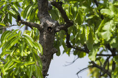 Bird in tree hollow Stock Photos