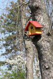 Bird tree house Royalty Free Stock Images