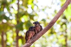 Bird on tree Royalty Free Stock Photos