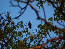 Bird on the tree Stock Photos