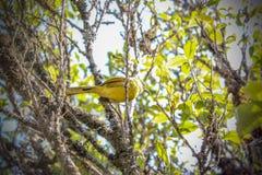 Bird on tree Royalty Free Stock Image