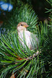 Bird in tree. Little bird sitting in the tree Royalty Free Stock Images