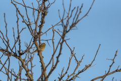 Bird on the tree 2. Bird perched on the tree with the blue sky in background royalty free stock image