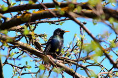 Bird on tree. In sanny day Royalty Free Stock Photography