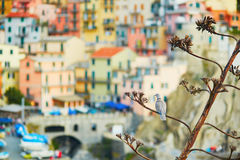 Bird on a tree and scenic view of Manarola, Cinque Terre, Italy Stock Images