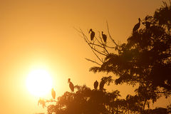 Bird and tree silhouette. In sunset Royalty Free Stock Photos