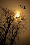 Bird and tree silhouettes. Tree branches and birds silhouetted against a pale sun shining through dense fog Royalty Free Stock Images