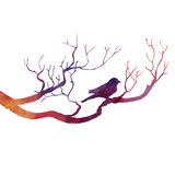 Bird at tree silhouettes Royalty Free Stock Photography